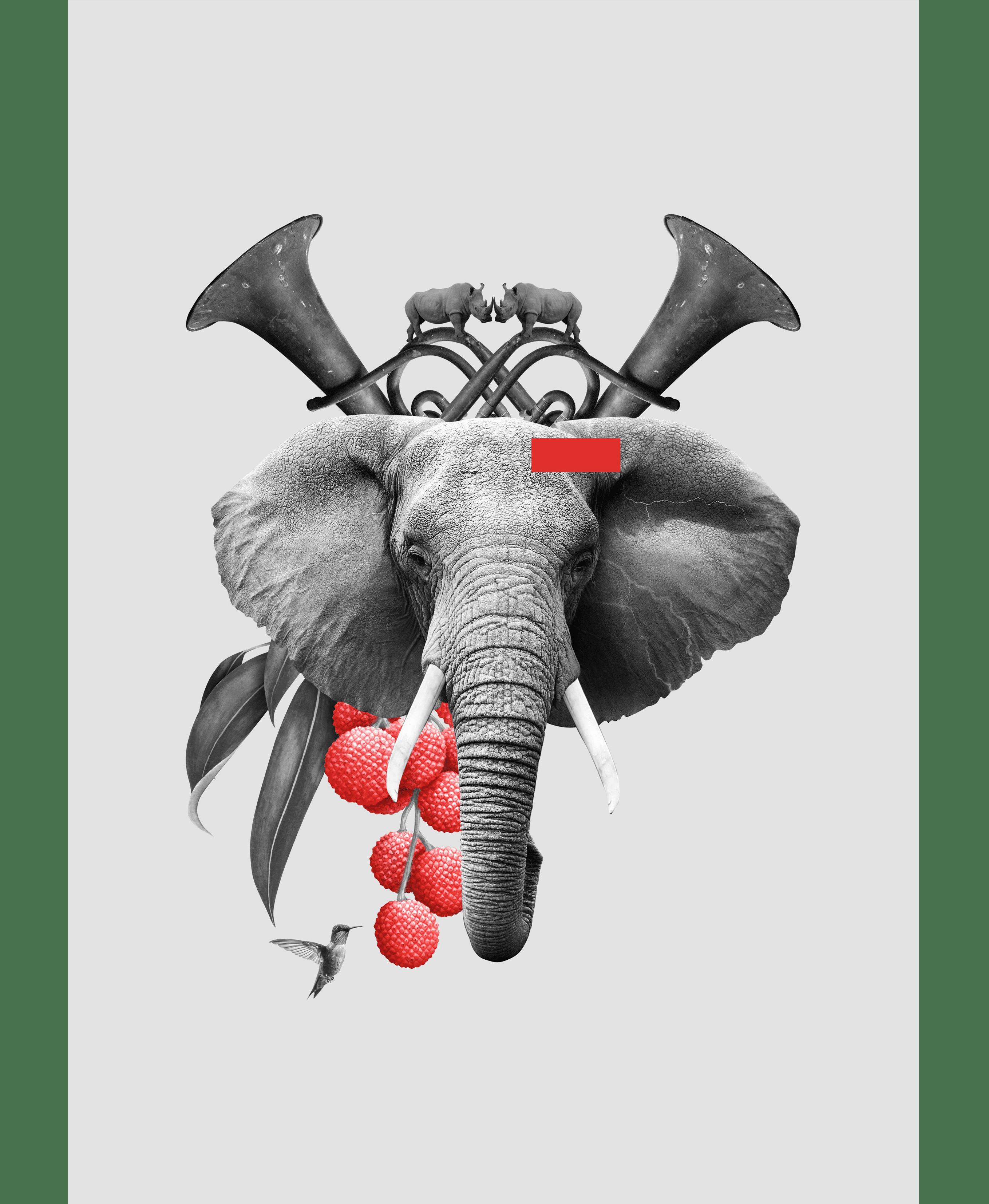 Tienda_Lamina elefante